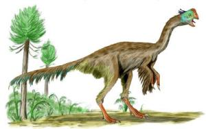 Image of a Raptor (from Wikipedia)